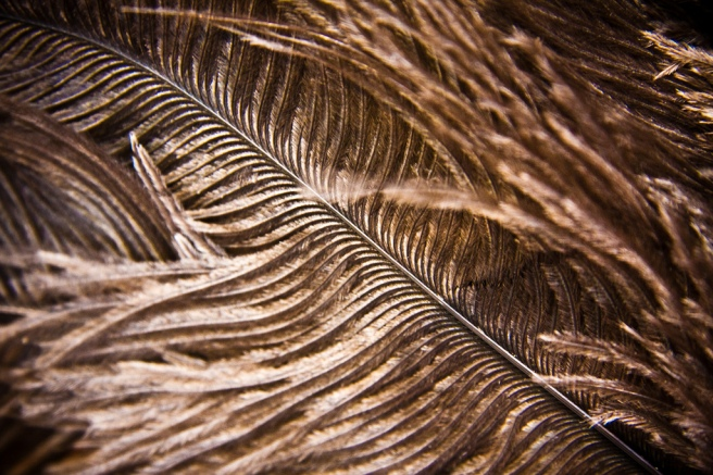 Ostrich Feather by Garry Knight is licensed under CC by 2.0